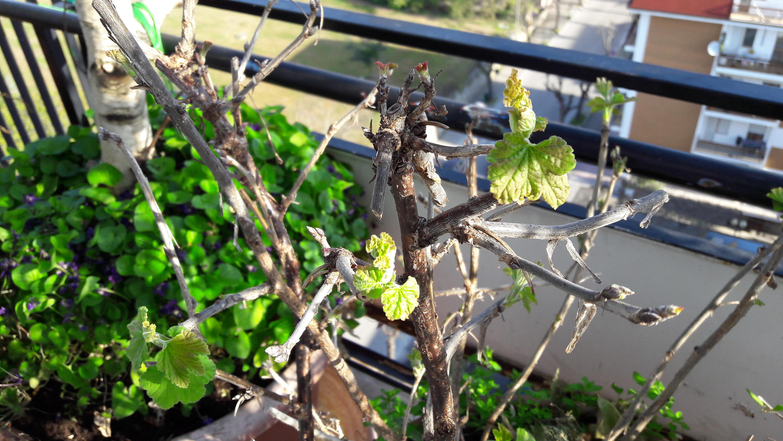 Nowcasting vegetale anno 2017-20170323_081544.jpg