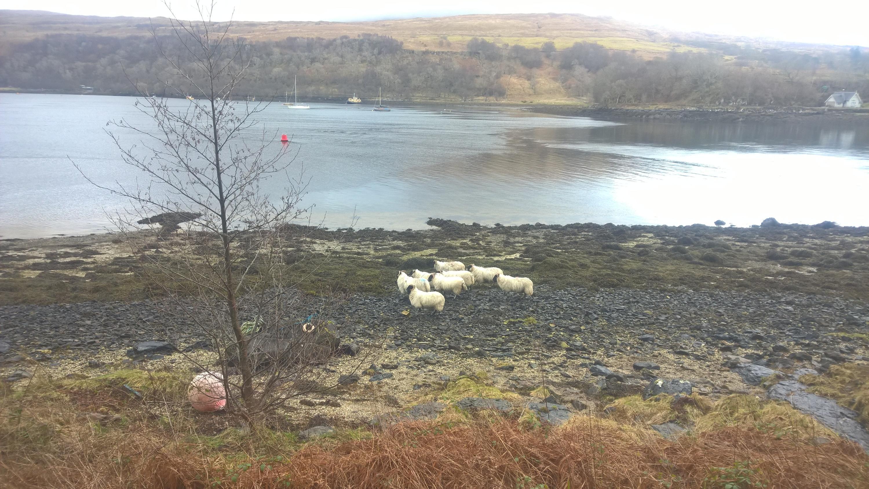 Il tempo a Lochaline, Highlands occidentali - Scozia-wp_20170312_12_51_38_pro.jpg