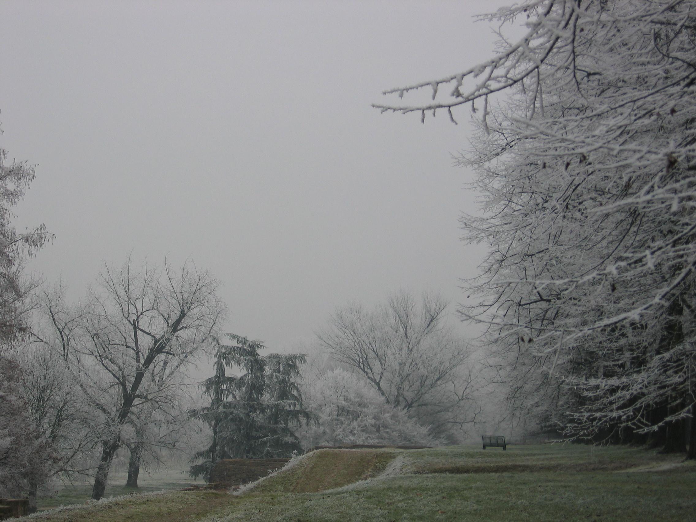 Reportage Galaverna - fine dicembre 2007 - Polesella (RO)-128_2895-1-.jpg