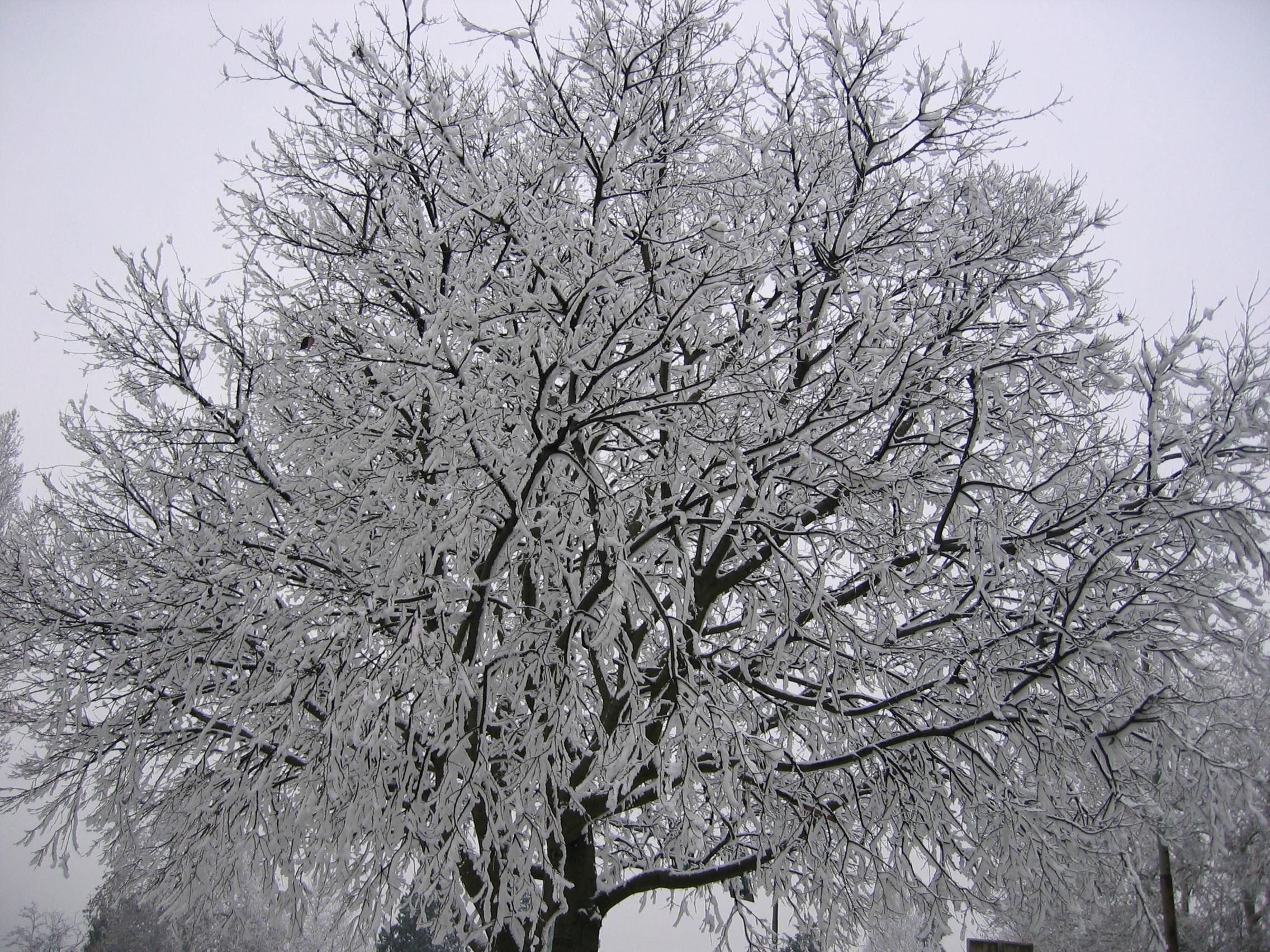 Reportage Galaverna - fine dicembre 2007 - Polesella (RO)-129_2915-1-.jpg