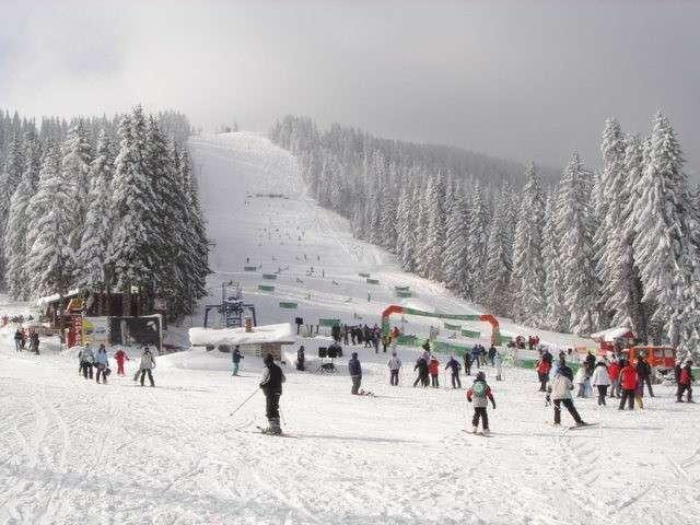 Conifere in Bulgaria-monti-pirin.jpg