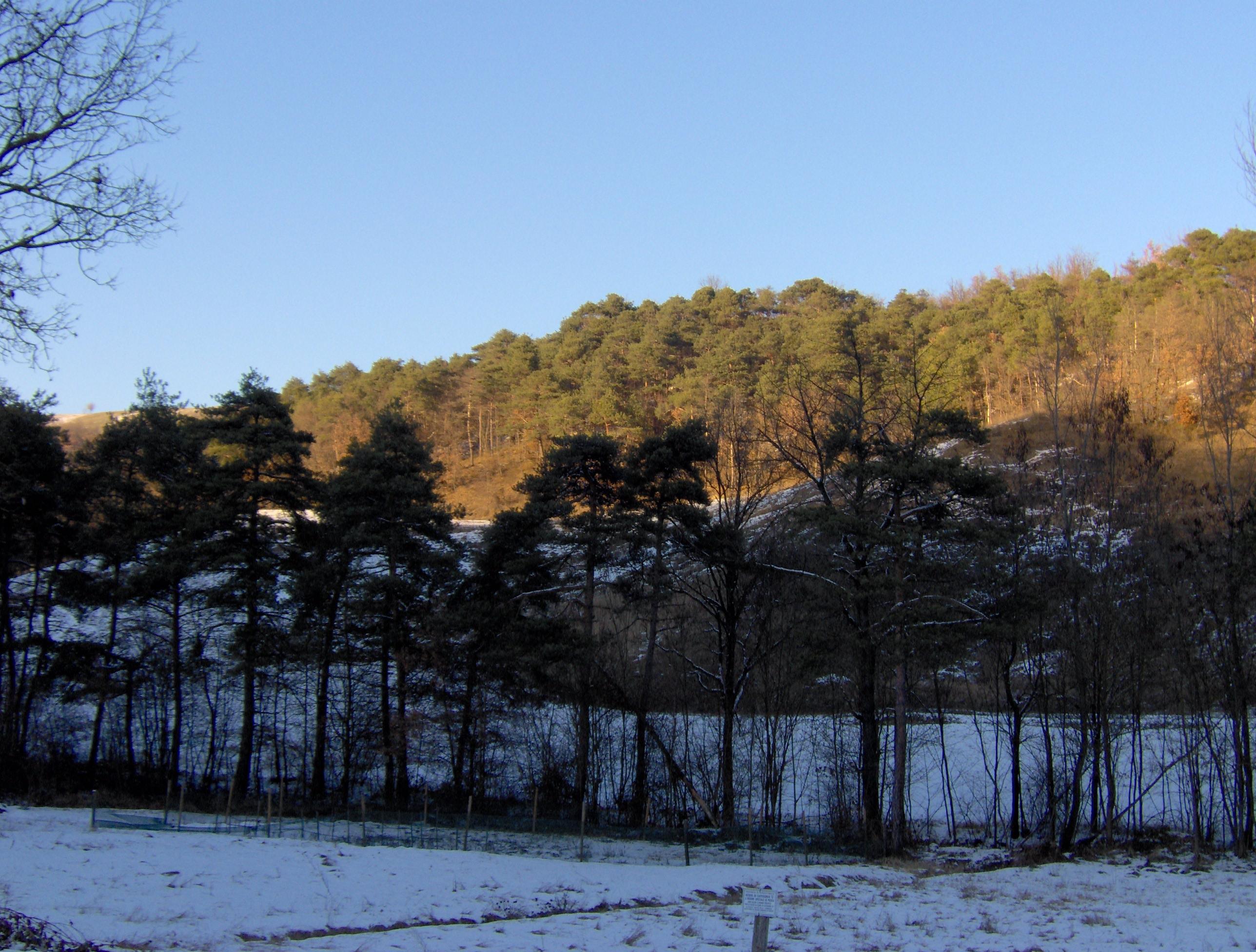 Conifere in Bulgaria-tresinaro-10b.jpg
