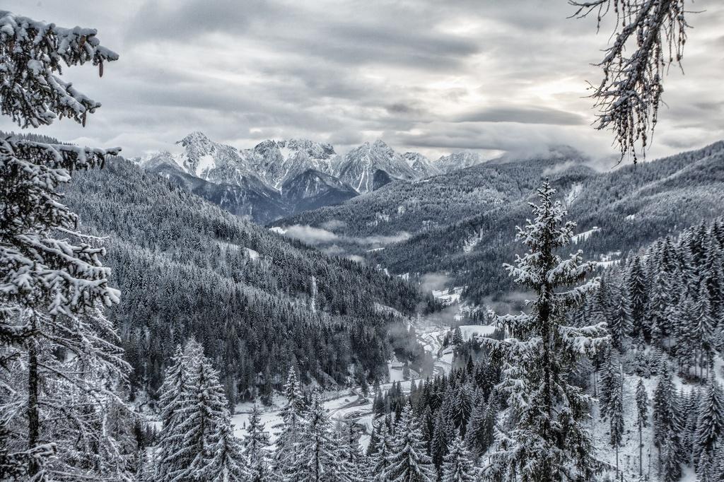 Conifere in Bulgaria-ugovizza-valuque3-1024x0.jpg