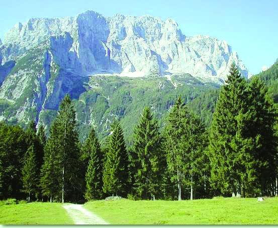 Conifere in Bulgaria-image.jpg