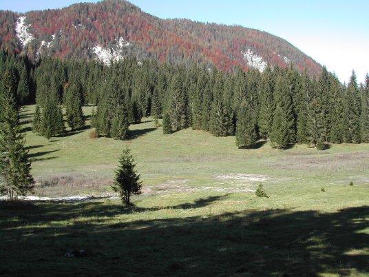 Conifere in Bulgaria-fusine6.jpg