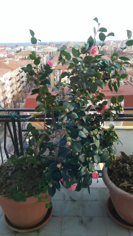 Nowcasting vegetazione anno 2018-img_20180113_085646.jpg