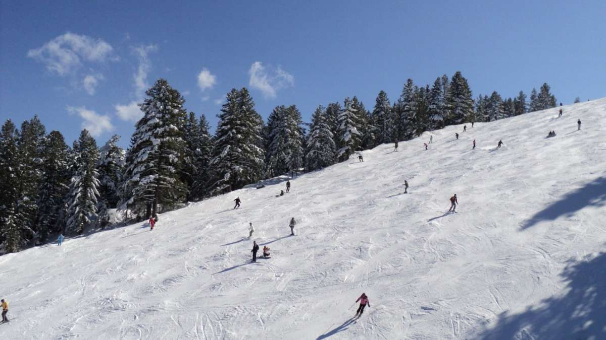 Conifere in Bulgaria-bansko-abeti-b.jpg
