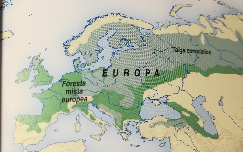 Conifere in Bulgaria-img_20180131_113859.jpg