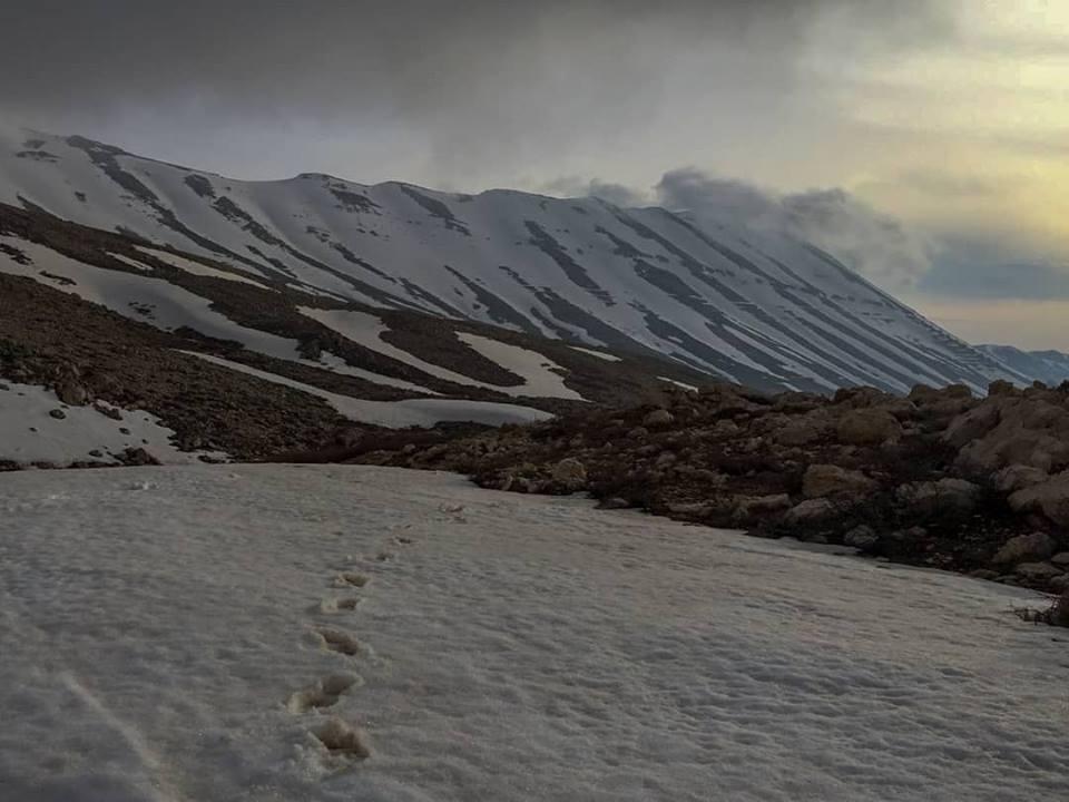 Catena del Libano - Situazione neve attraverso le stagioni-30704338_10160260249505072_546076400523289087_n.jpg