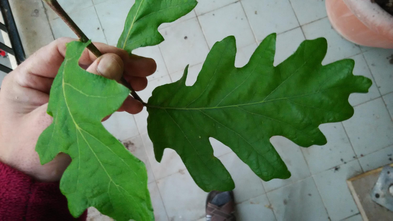 Nowcasting vegetazione anno 2018-img_20180422_194924_1.jpg