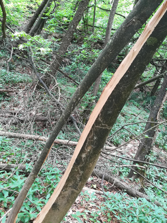 Nowcasting vegetazione anno 2018-img_20180501_120147.jpg