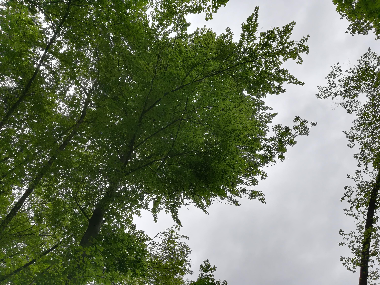 Nowcasting vegetazione anno 2018-img_20180501_114317.jpg
