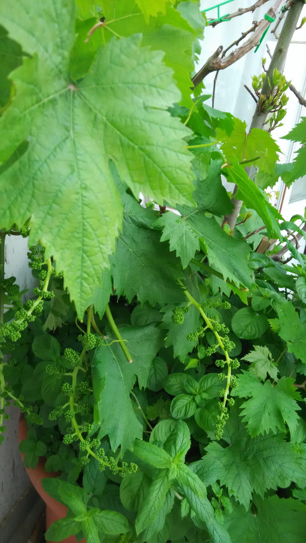 Nowcasting vegetazione anno 2018-img_20180509_082813.jpg