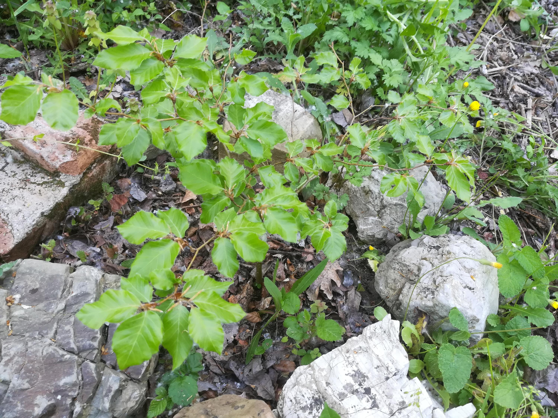 Nowcasting vegetazione anno 2018-img_20180425_084305.jpg