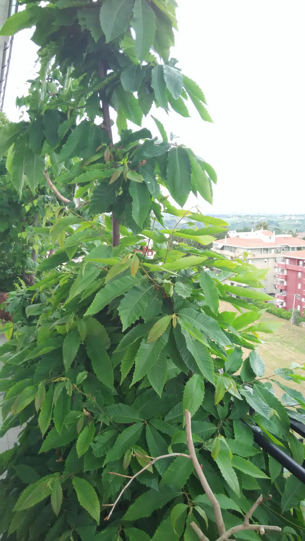 Nowcasting vegetazione anno 2018-img_20180516_144622.jpg