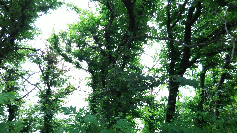 Nowcasting vegetazione anno 2018-img_20180523_115317.jpg