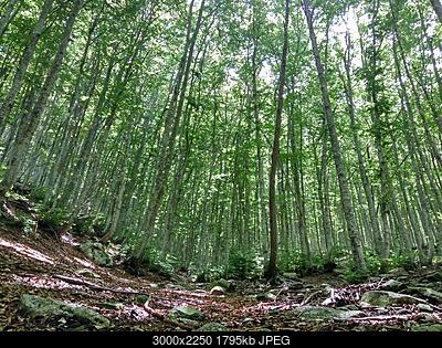Alberi tipici delle regioni italiane-img_20180629_115433_hdr.jpg