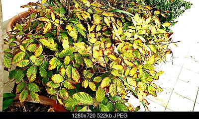 Nowcasting vegetazione anno 2018-img_20181028_121823_1540725616622.jpg
