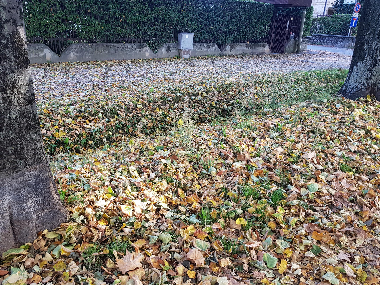 Basso Piemonte Ottobre 2018-20181024_160225.jpg