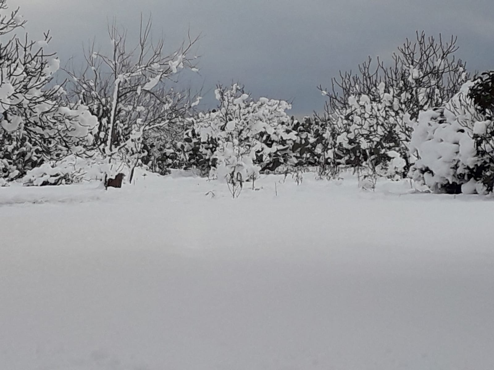 Galleria fotografica neve 03-04 gennaio 2019-img-20190105-wa0005.jpg