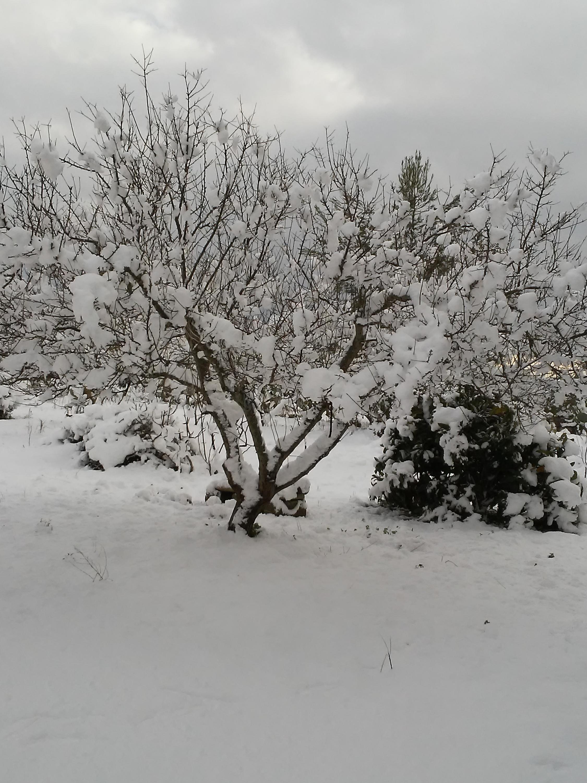Galleria fotografica neve 03-04 gennaio 2019-20190105_094839.jpg