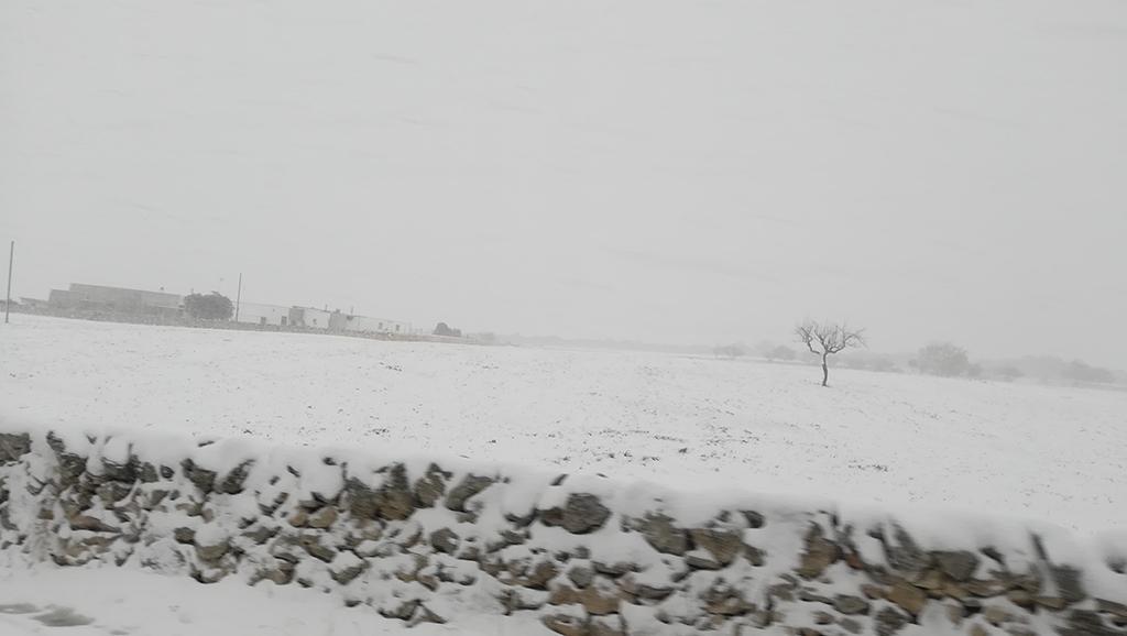 Galleria fotografica neve 03-04 gennaio 2019-mottola-noci.jpg