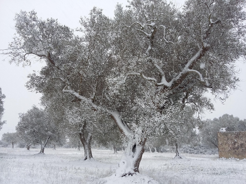 Galleria fotografica neve 03-04 gennaio 2019-20190104_152017.jpg
