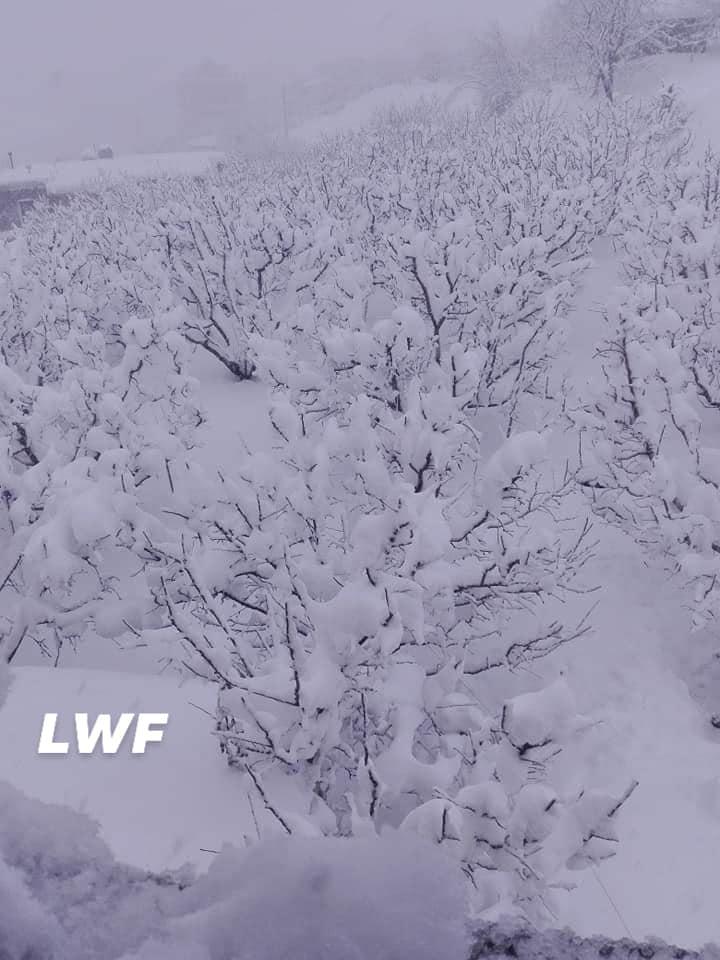 Catena del Libano - Situazione neve attraverso le stagioni-49948259_2290813454264932_3492185295028224000_n.jpg