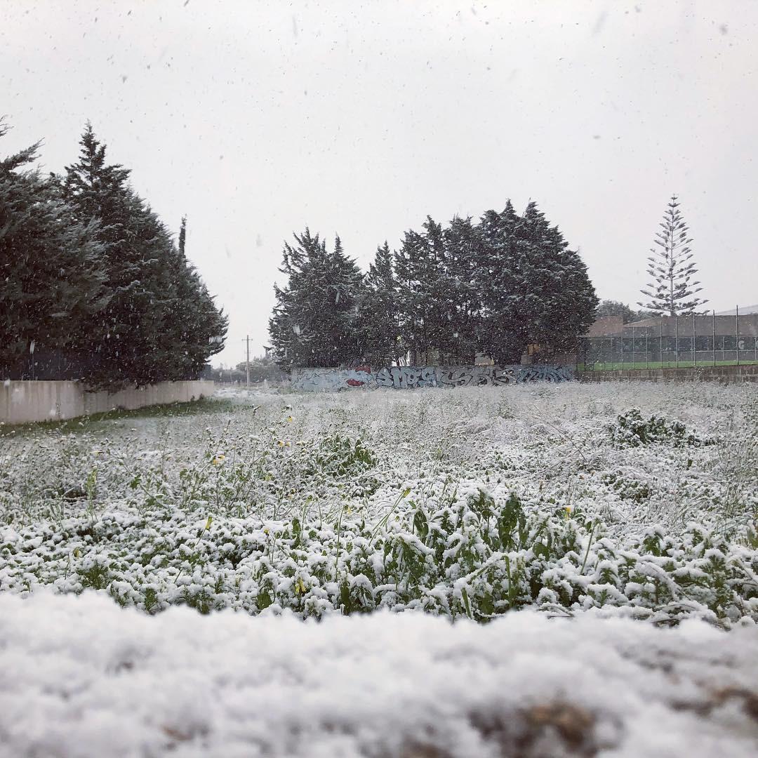 Galleria fotografica neve 03-04 gennaio 2019-1e1aa281-f1ef-4c24-8106-a34c72663c32.jpeg