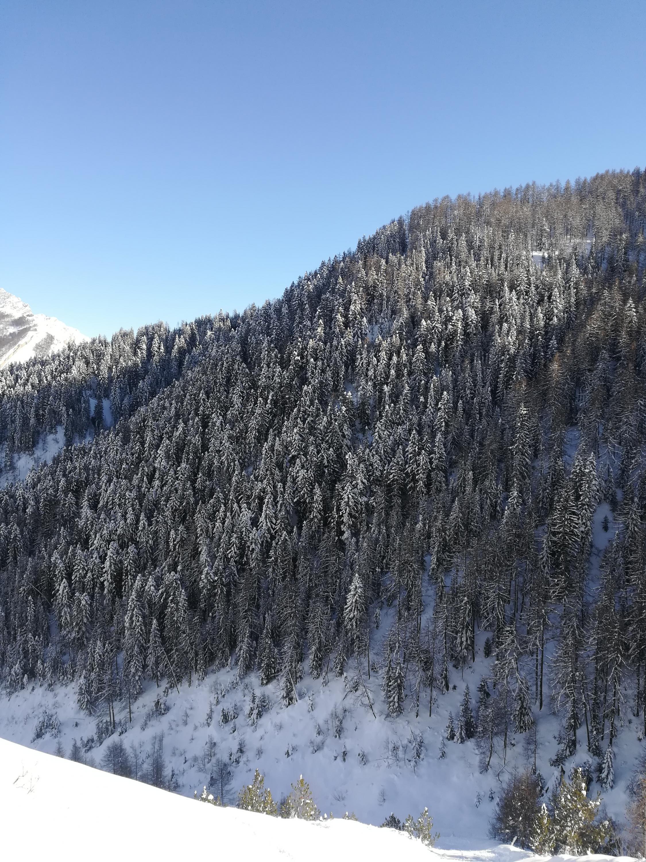 Basso Piemonte Febbraio 2019 - inizio col botto?-img_20190204_145130.jpg