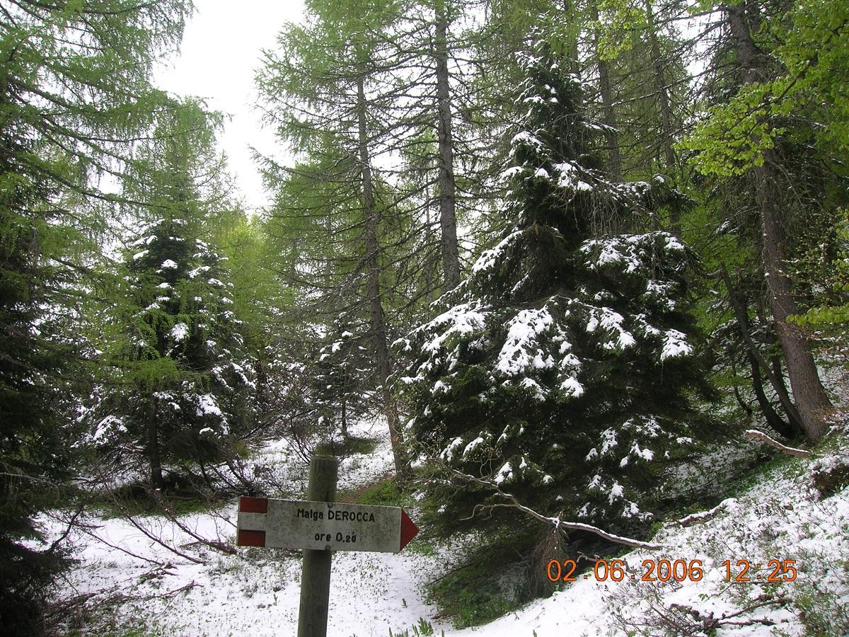 Ondata di freddo che ha portato precipitazioni nevose sotto i 500 m in estate-06-2006-074.jpg