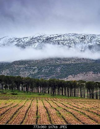 Catena del Libano - Situazione neve attraverso le stagioni-52082360_2093619727399292_1814585547545378816_n.jpg