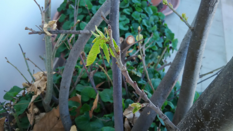 Nowcasting vegetazione 2019-img_20190317_094437.jpg