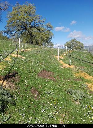 Nowcasting vegetazione 2019-img_20190414_103132.jpg