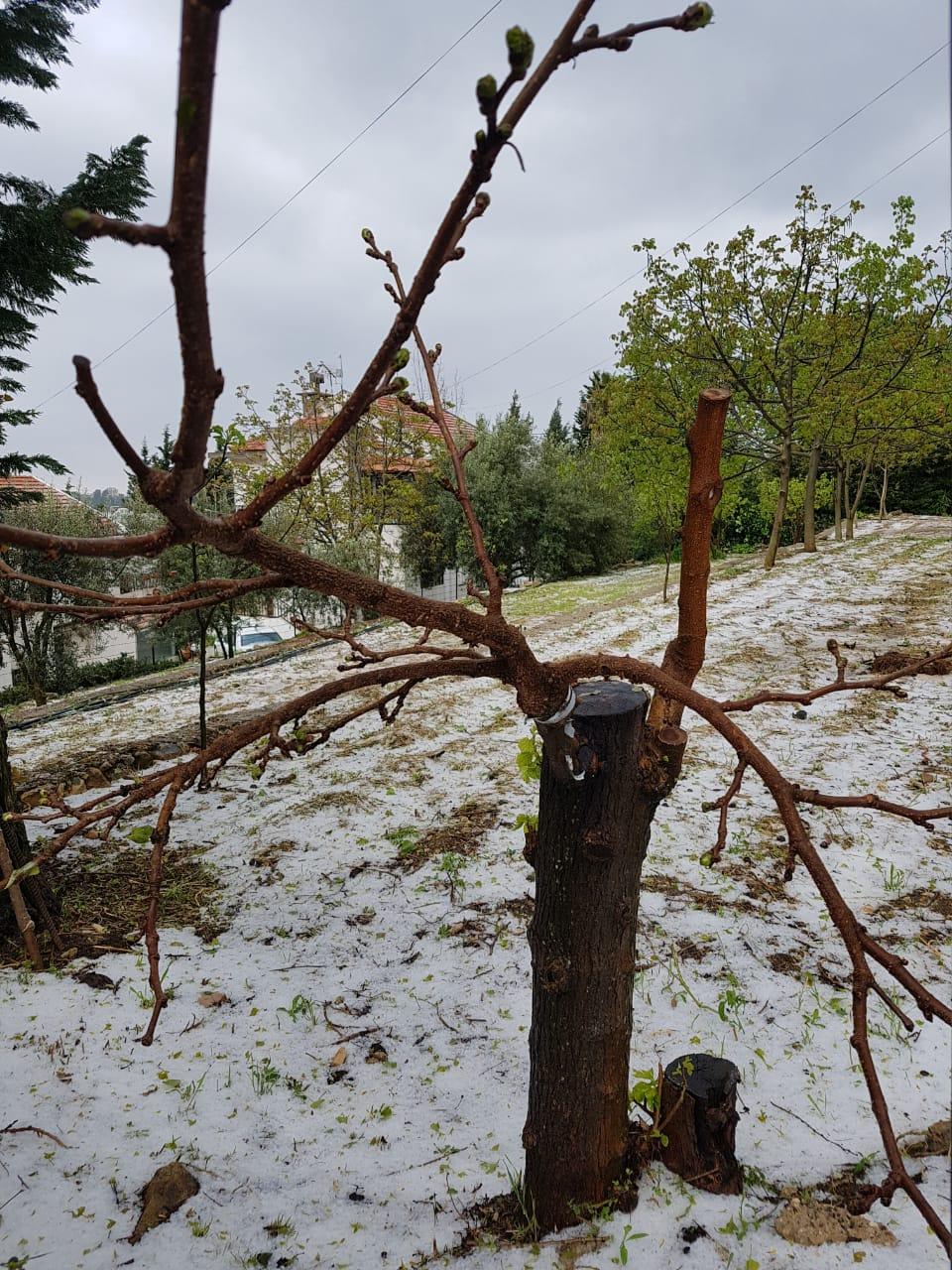 Catena del Libano - Situazione neve attraverso le stagioni-19-aprile-2019-cell-and-019.jpg