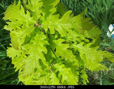 Nowcasting vegetazione 2019-20190426_125302.jpg