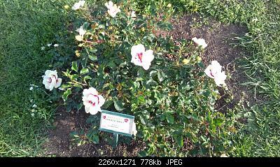 Nowcasting vegetazione 2019-20190425_182553.jpg