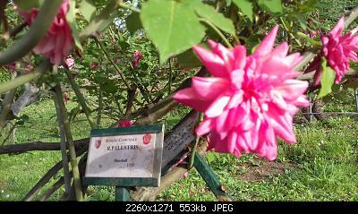 Nowcasting vegetazione 2019-20190425_183546.jpg
