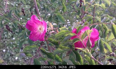 Nowcasting vegetazione 2019-20190425_184400.jpg