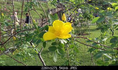 Nowcasting vegetazione 2019-20190425_183204.jpg