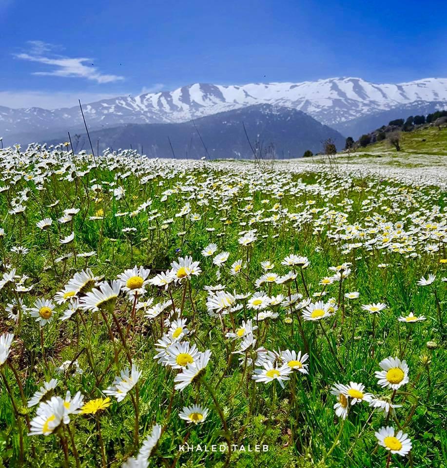 Catena del Libano - Situazione neve attraverso le stagioni-57550537_2401819616496893_3965040509755326464_n.jpg