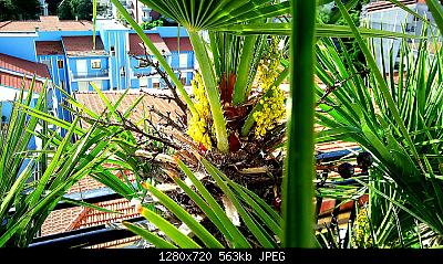 Nowcasting vegetazione 2019-img_20190521_081453_1558419661671.jpg