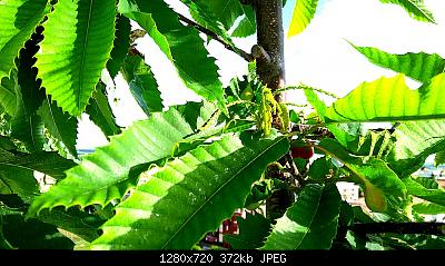 Nowcasting vegetazione 2019-img_20190521_081511_1558419614782.jpg
