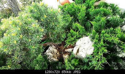 Nowcasting vegetazione 2019-img_20190521_081605_1558419548278.jpg