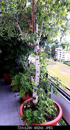 Nowcasting vegetazione 2019-20190531_074835_1559283208118.jpg