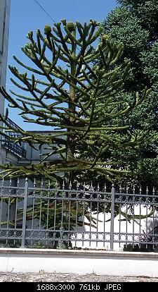 Nowcasting vegetazione 2019-img_20190613_101714.jpg