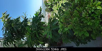 Nowcasting vegetazione 2019-20190630_121644.jpg