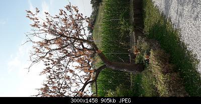 Nowcasting vegetazione 2019-20190723_171723.jpg
