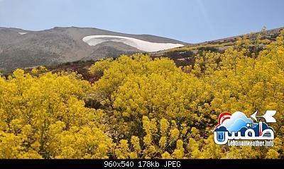 Catena del Libano - Situazione neve attraverso le stagioni-67228331_2483571531703423_3945565624796708864_n.jpg