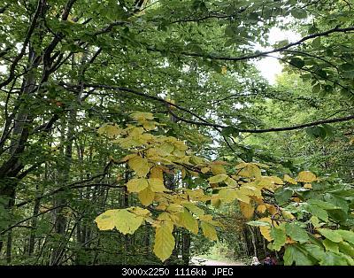 Nowcasting vegetazione 2019-890036bb-44e1-4061-b922-c1822fb6c9f5.jpg